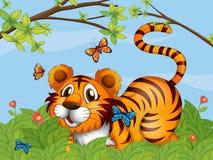 En tiger med fjärilar i trädgården Arkivfoton