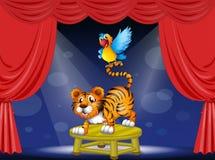 En tiger och en färgrik papegoja som utför på etappen Arkivfoto
