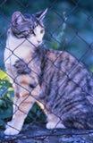 En Tigered katt i en trädgård royaltyfri bild