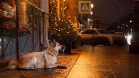 En tillfällig hund i staden Natt på gatan arkivbild