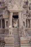 En tillfällig katt Royaltyfria Bilder