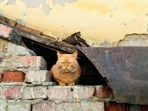 En tillfällig katt Arkivbild