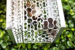 En tjalla i en bur Arkivfoto