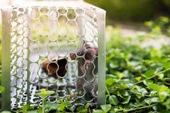 En tjalla i en bur på busken Arkivbild