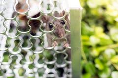 En tjalla i en bur i trädgården Fotografering för Bildbyråer