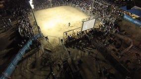 En tjur kör snabb raksträcka till baksidan stock video