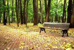 En tom bänk i en skog Royaltyfri Bild