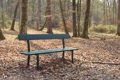 En tom bänk på skogen Arkivbild