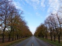 En tom väg bland höstträden Royaltyfri Fotografi