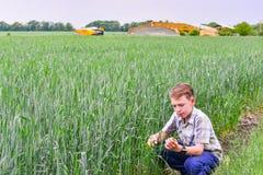 En tonåring sitter och studerar grönt vete i jordbruk royaltyfri bild