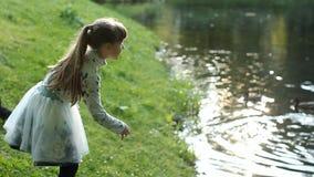 En tonårs- flicka spelar på kusten av sjön - matningar fåglarna, jublar och vilar stock video