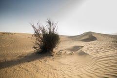 En torkad buske i öknen royaltyfria foton