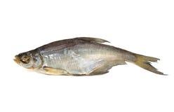 En torkad fisk på en vit bakgrund arkivfoton