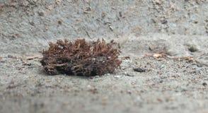 En torkad mossa i jordningen arkivbilder