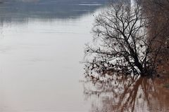 En torr trädstandng i vattnet Royaltyfri Fotografi
