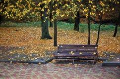 En träbänk i en höst parkerar Royaltyfri Foto