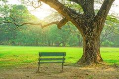 En träbänk under stora gröna sidafilialer av morgonen för regnträd och solskenbredvid ny gräsmattagård för grönt gräs royaltyfri bild