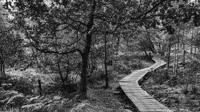 Skogsmarkbana royaltyfri fotografi