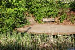 En träbank på dammet bland buskar och trees1 Arkivbild