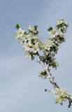 En trädblomning i vår med bin på blommorna Arkivfoto