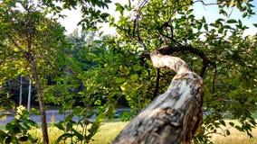 En trädfilial royaltyfria foton