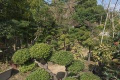 En trädgård av blommor och bönder Arkivbilder