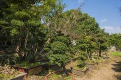 En trädgård av blommor och bönder Royaltyfria Bilder