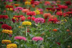 En trädgård av mor royaltyfri bild