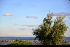 En trädgård i Altınoluk kuster arkivfoton