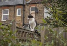 En trädgård i London, England - en katt på ett staket; en molnig dag arkivbilder