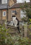 En trädgård i London, England, UK - en katt på ett staket; en molnig dag arkivbilder