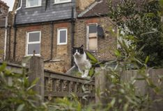 En trädgård i London - en katt på ett staket royaltyfri fotografi