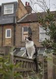 En trädgård i London - en katt på ett staket; en molnig dag royaltyfri fotografi