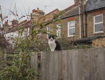 En trädgård i London och en katt; dyster dag i London royaltyfri foto