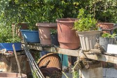 En trädgård i Poros Elios Proni, Cephalonia Kefelonia, Grekland Fotografering för Bildbyråer
