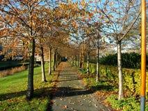 En trädgård på en solig höstdag i Amstelveen Holland Royaltyfria Foton