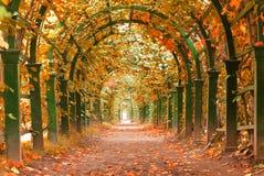 En trädgård på hösten royaltyfria bilder