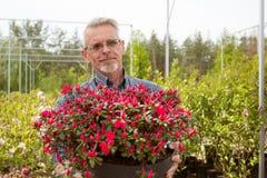 En trädgårdsmästare som rymmer en stor kruka med röda blommor arkivbild
