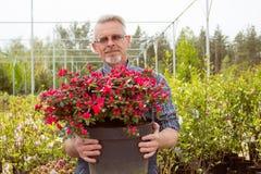 En trädgårdsmästare som rymmer en stor kruka med röda blommor arkivfoton