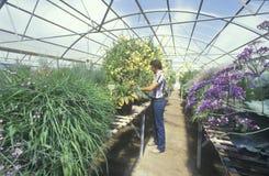 En trädgårdsodlare leder miljöforskning royaltyfria foton