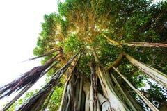 En trädstam Arkivbilder