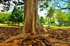 En trädstam Arkivfoton
