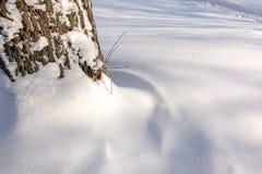 En trädstam som är insnöad i vinter arkivfoton