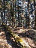 En trädstam som är stupad i en skog royaltyfria bilder
