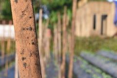 en trädstam som stiger som någon drömmen fotografering för bildbyråer