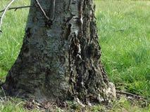 En trädstubbe Arkivbilder