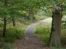 En trägångbana till och med träden, bruna sidor sprider gren arkivbilder