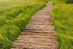 En träslinga till och med det Alaytian träsket Arkivfoto