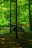 En trävandringsled in i sjön Biograd Arkivfoto