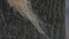 En tr?d av linne- eller jute- eller hampafibrer som fladdrar i vinden mot bakgrunden av tr?dsk?llet Closeupmakroskott r?tt lager videofilmer